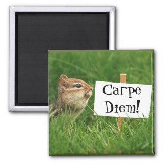 Carpe Diem! Chipmunk with Sign Square Magnet