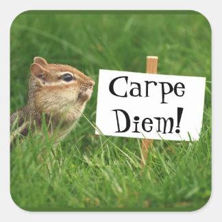 Carpe Diem! Chipmunk with Sign Stickers