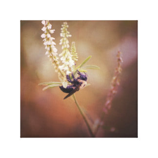 Carpenter Bee on White Flower Moody Nature Photo Canvas Print