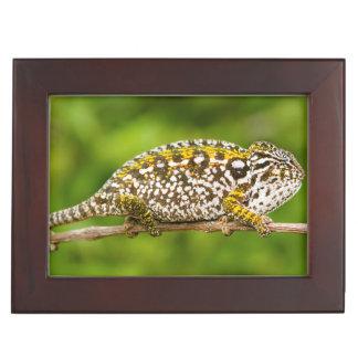 Carpet chameleon keepsake box