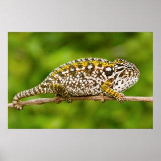 Carpet chameleon print