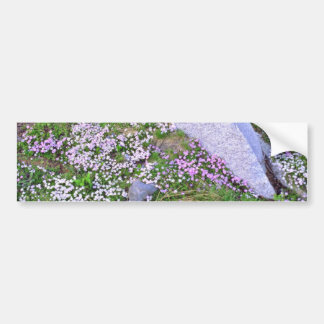 Carpet Of Pink Wildflowers Near Granite flowers Bumper Sticker