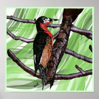 Carpintero de Puerto Rico/Puertorican Woodpecker Poster