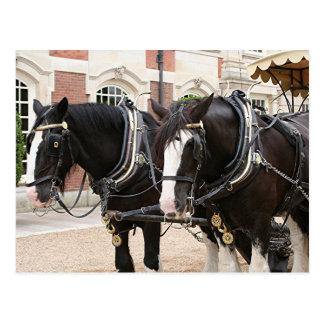 Carriage draft horses postcard