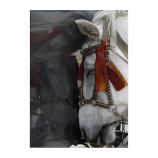 Carriage Horse and Its Reflection Acrylic Wall Art