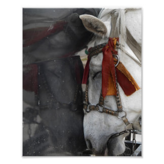 Carriage Horse and Its Reflection Photo Print
