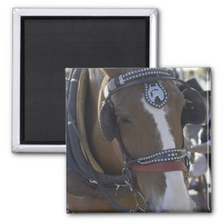 Carriage Horse Square Magnet
