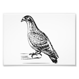 Carriage Pigeon Line Drawing Photo Print