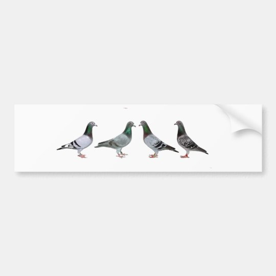 Carrier pigeons champions bumper sticker