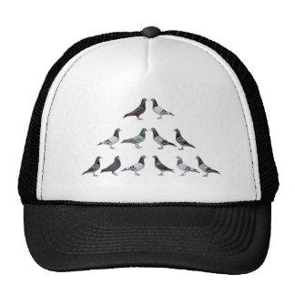 Carrier pigeons champions cap