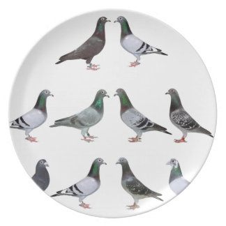 Carrier pigeons champions plates