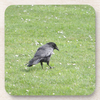 Carrion Crow In Grass Beverage Coaster