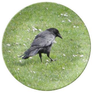 Carrion Crow Porcelain Plates