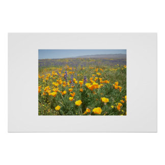 Carrizo Wildflowers Poster