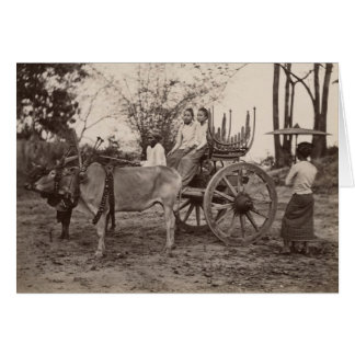Cart pulled by two oxen at Mandalay, Burma Card