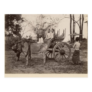 Cart pulled by two oxen at Mandalay, Burma Postcard