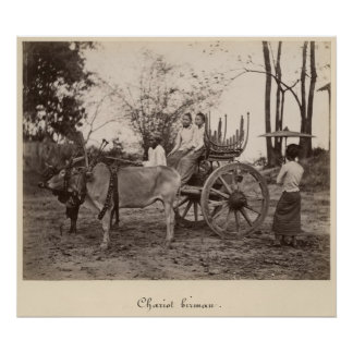 Cart pulled by two oxen at Mandalay, Burma Poster