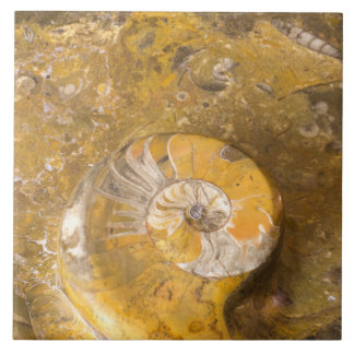Carved Bowl Made of Fossils in Rock Closeup Photo Large Square Tile