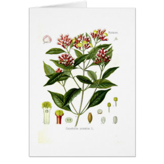 Caryophyllus aromaticus (Clove) Card