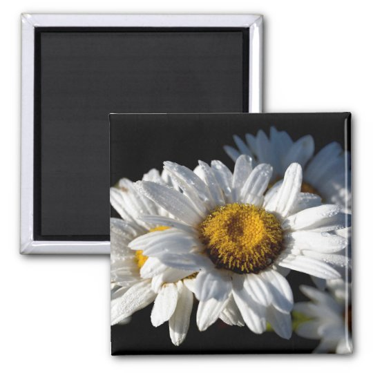Cascading Daisy Square Magnet