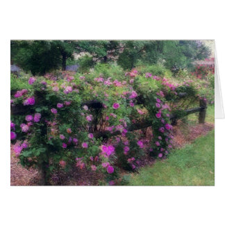 """""""Cascading Pink Roses Over Wooden Fence"""" (photog. Note Card"""