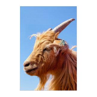Cashmere Goat Head Detail Acrylic Wall Art