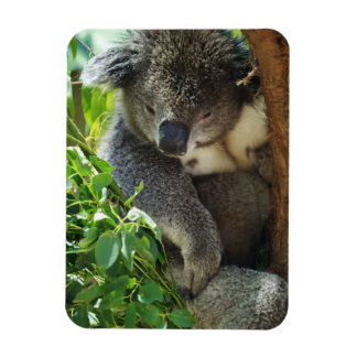 Casual Koala Flexible Magnet