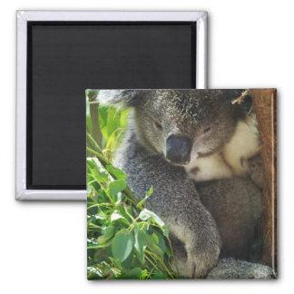 Casual Koala Magnet Fridge Magnet