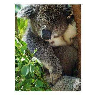 Casual Koala  Postcard