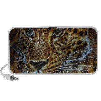 cat-301154  cat rauptier zoo wild animal portrait travel speaker