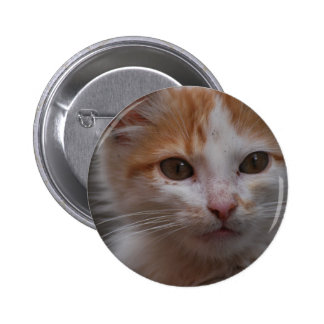 Cat 6 Cm Round Badge