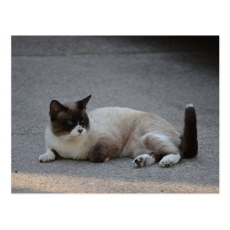 Cat 7 postcard