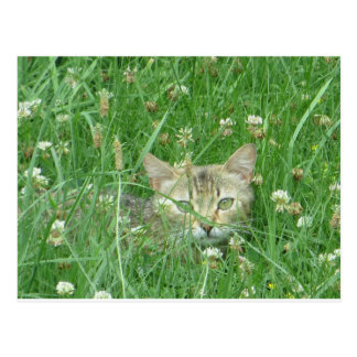 Cat Amidst Clover Postcard