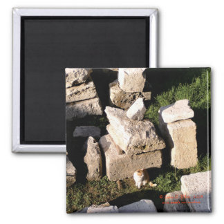 Cat Among the Ruins Square Magnet