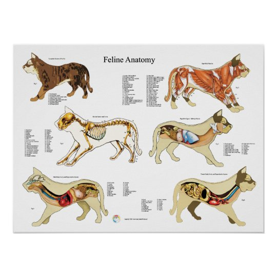 Cat Anatomy Poster Wall Chart