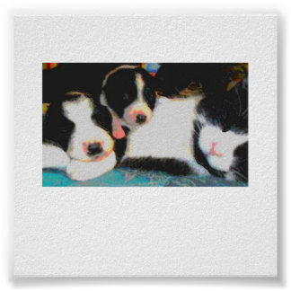 cat and 2 puppies sleeping poster