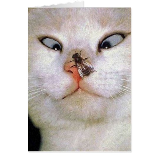 Cat and Bee/all occasion Card