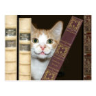 Cat and books postcard