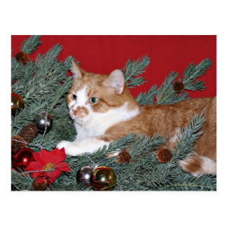 Cat and Christmas tree Postcard