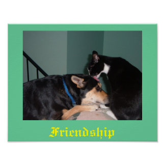 cat and dog friendship poster