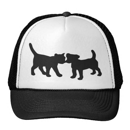 cat and dog hat