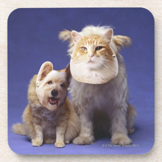 Cat and dog with masks coaster