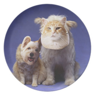 Cat and dog with masks plate