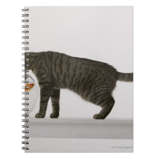 Cat and goldfish notebook