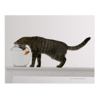 Cat and goldfish postcard