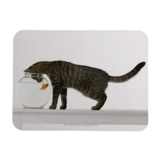Cat and goldfish rectangular photo magnet