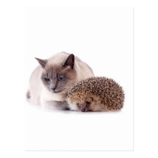 cat and hedgehog postcard