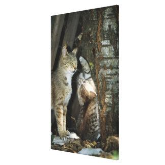 Cat and Kitten by Tree Canvas Print