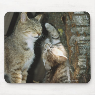 Cat and Kitten by Tree Mouse Pad