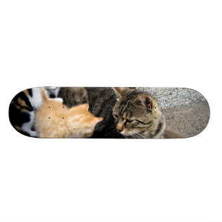 Cat and Kittens Staring at each other Skateboard Decks